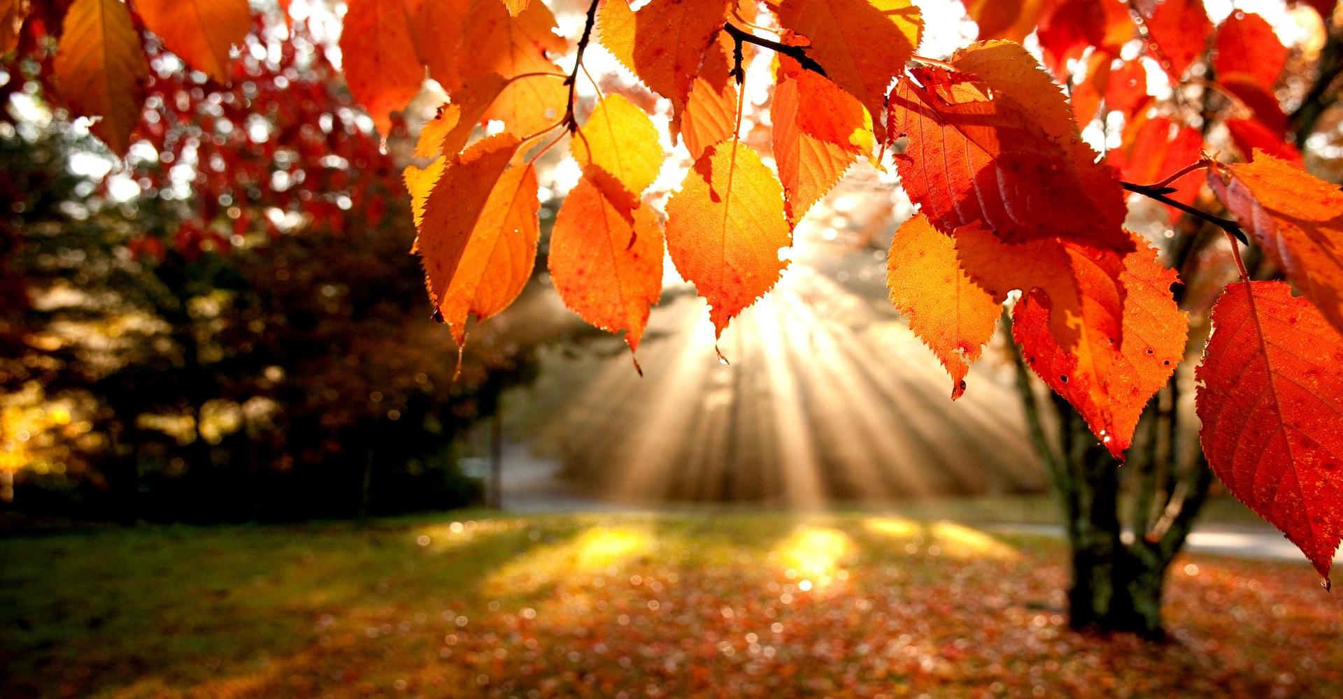 Höstfixardag Lördag 19 Oktober